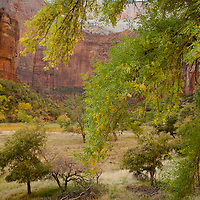 A walk along the Virgin River Trail leads to many wonderful views of canyon walls.