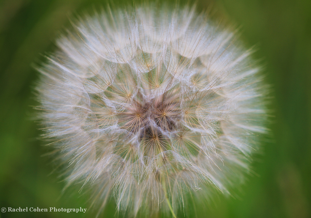 &quot;Puffball&quot;<br />