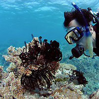 Scubadiver doing a safaty stop on the ascent (model released).Great Barrier Reef, Australia, Pacific Ocean