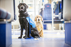 Susan Rodgers with Cinders, and Brenda Elliot with Justice. Trainee guide dogs will travel on the trams for the first time to familiarise themselves with the service, arriving at the Edinburgh Airport tram stop.