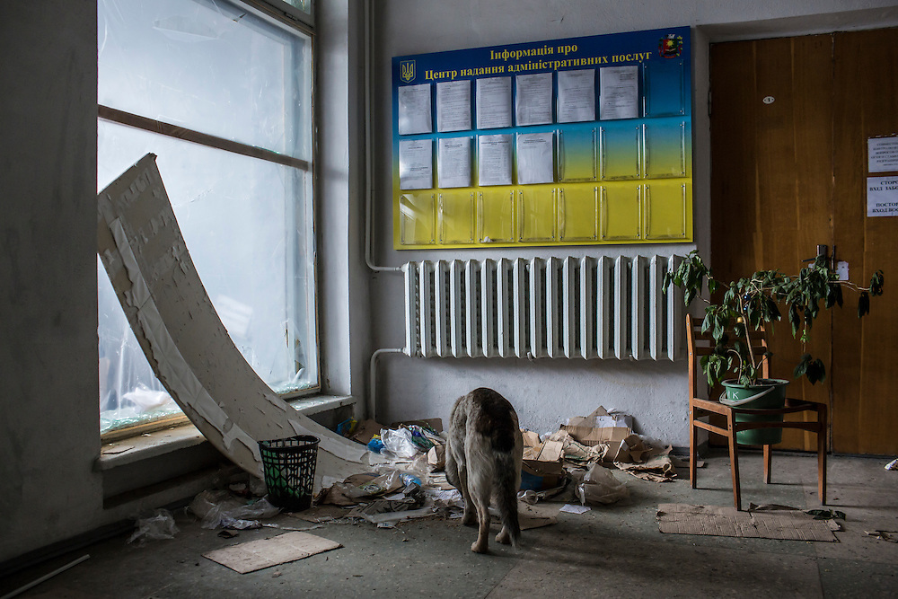 A stray dog searches through trash for food in the lobby of a municipal building on February 7, 2015 in Debaltseve, Ukraine. The Ukrainian-controlled town, surrounded on three sides by rebel forces, has been undergoing heavy shelling for more than a week, but a brief ceasefire allowed many residents to evacuate and others to simply venture out from their homes.