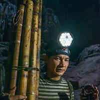 A man holding a birds nest and poles, Miri Caves, Miri, Sarawak, Malaysia, Borneo,