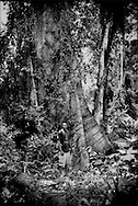 """Iwan, a Saamaka Maroon man, stands in front of a massive rainforest tree near Djumu, Suriname.  The Maroon people along the upper Suriname River are effective stewarts of the land they claimed centuries ago after fleeing their Dutch slave masters.  In 1762, the Saamaka signed a treaty with their Dutch colonial master affording them freedom, territory and autonomy.  In the landmark 2007 decision for """"Saamaka v Suriname"""" at the Inter-American Court of Human Rights in Costa Rica, the court """"guaranteed territorial rights not just for Saamaka, but for all Maroons and indigenous people"""" in Suriname. In Djumu, Boven Suriname (Upper Suriname River).  Suriname."""