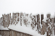 detail of a snow covered coyote fence in New Mexico