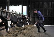 07/05/15 - SAINT BONNET DE CHIRAC - LOZERE - FRANCE - GAEC des Bleuets, elevage mixte bovin/ovin lait. Repousse du foin - Photo Jerome CHABANNE
