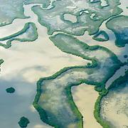 Vista aérea de las caprichosas formas del manglar en la Reserva de la Biosfera Marismas Nacionales Nayarit.