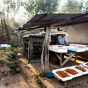 Emiliano is sorting and packing the strawberries harvested that morning. Emiliano Dominguez, 33, is a strawberry, beans and potato farmer in western Honduras. The father of three joined the USAID ACCESO project in 2013. Since then Emiliano has witnessed a significant increase in his crop production. Strawberry farming has been particularly profitable. In the three years since Emiliano joined the CropLife funded program, he has been able to buy more land, a truck to deliver his products, build a modern house with running water and electricity, and buy a television with a satellite dish. Emiliano is optimistic about the future and proud to be able to give his children the childhood and education he didn't get. Guice, Intibucá, Honduras.