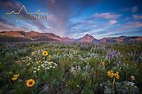 sunrise two medcine valley wild flower blooming