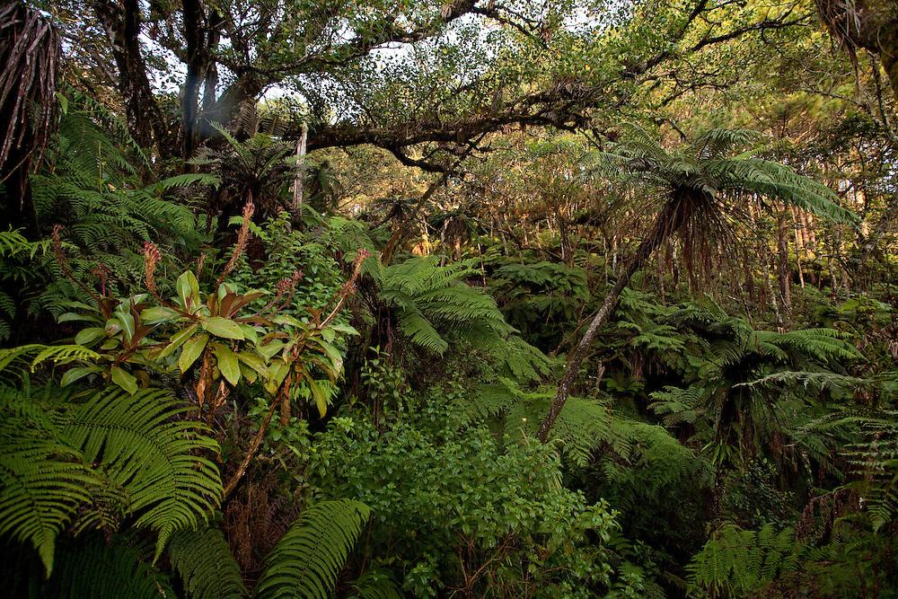 Habitat near Pic Formond at around 1,900m in Macaya Biosphere Reserve on the Massif de la Hotte, Haiti