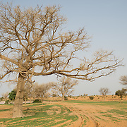 A view of the landscape during the rainy season near the village of Gadirga in the Commune of Soukoukoutan in the Dosso Region of Niger on 23 July 2013.