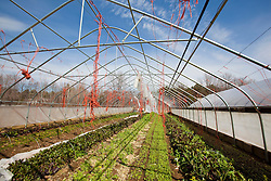 A greenhouse damaged by a rain and wind storm in South Hampton, New Hampshire. Heron Pond Farm greenhouse.  March.