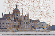 AUG 31 2014 Rubber duck race for charity in Budapest