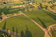 Lachini vineyard, Chehalem Mountain AVA, Willamette Valley, Oregon