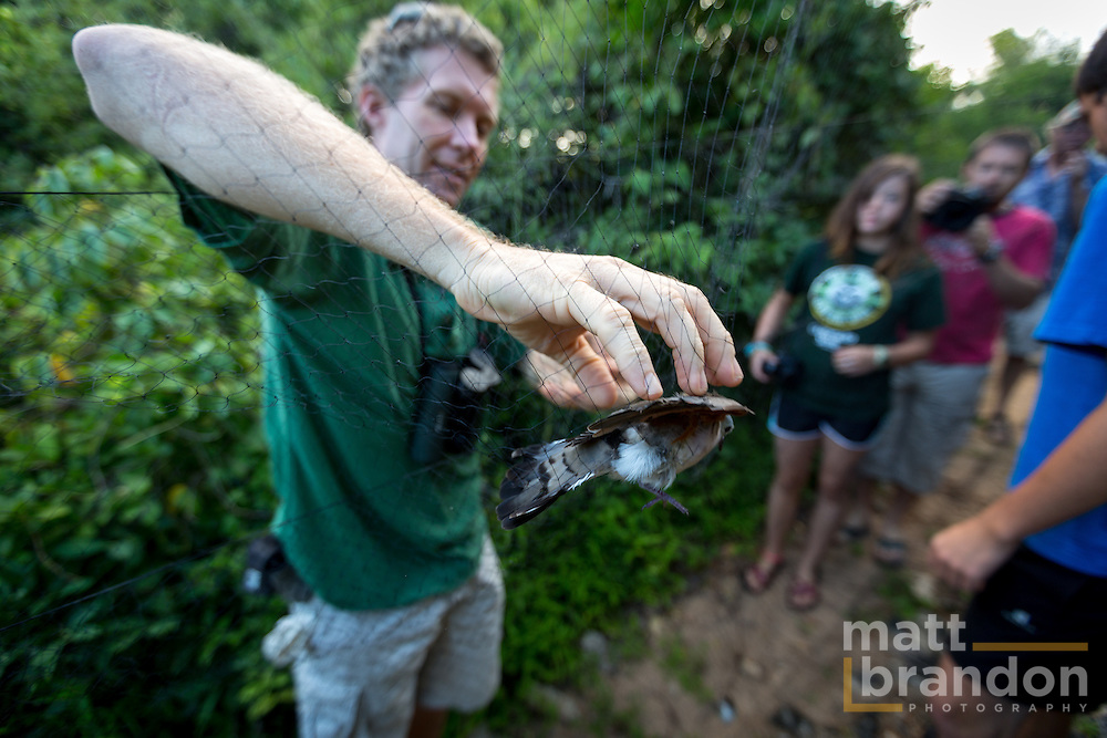 Colin Jackson, Conservation & Science Director for A Rocha Kenya pulls a dove from the capture nets.