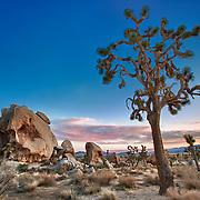 Joshua Tree And Half Skull At Sunset - Joshua Tree National Park CA