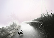 Image of a black cat on a trail in Bellevue, Washington, Pacific Northwest