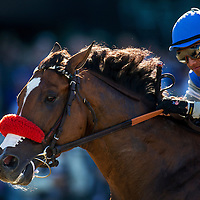 Goldencents , ridden by Rafael Bejarano wins the Breeders' Cup Dirt Mile on November 1, 2013 at Santa Anita Park in Arcadia, California during the 30th running of the Breeders' Cup.(Alex Evers/ Eclipse Sportswire)