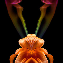 Shoot/Week 04: Prismatic Flowers