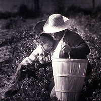 A child rests his head upon his grandmother while she is working in a field in Queen Anne-s County, Maryland in 1981.
