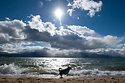A dog runs along the shore of Lake Tahoe