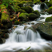 A small creek in Wallace Falls State Park near Goldbar, Washington, flows past ferns and moss-covered boulders.