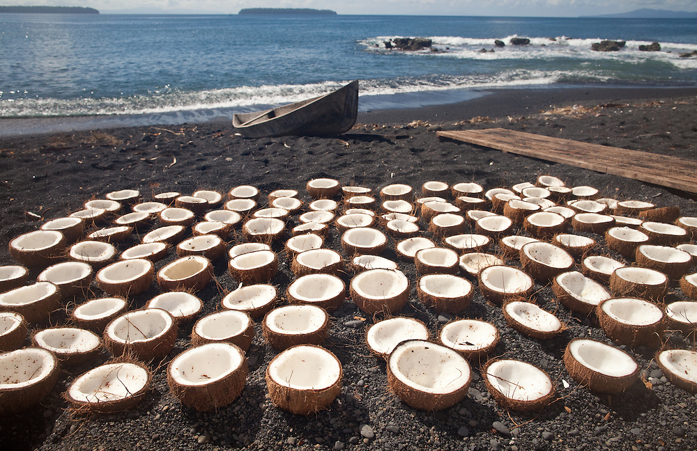Coconuts dry in the sun ready to be grated and shipped from Rendova