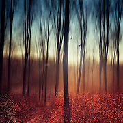 Abstraction of a forest at sunrise on a fall morning