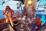 Bob Hamilton, Fisherman, Greenport,  New York, Long Island Sound, fishing