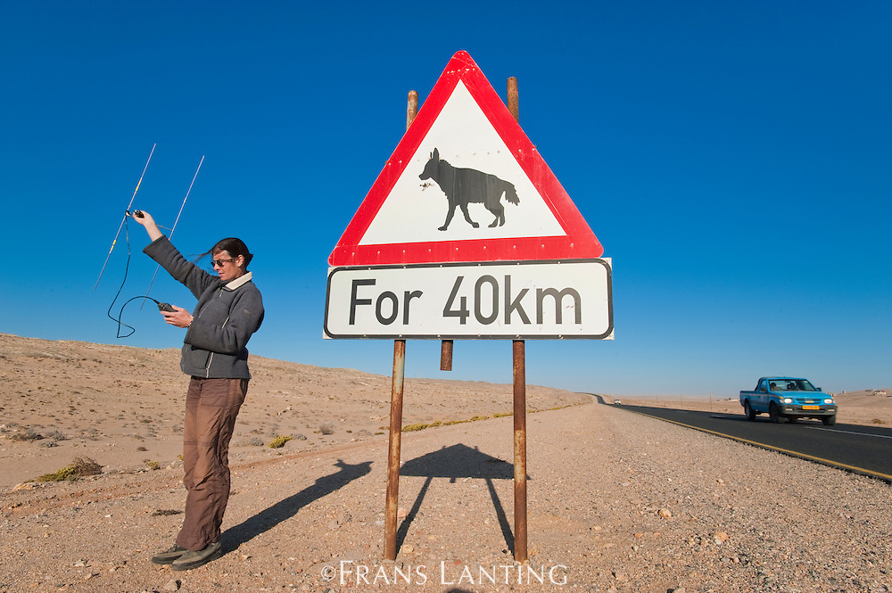 Researcher Ingrid Wiesel with brown hyena road sign, Hyaena brunnea, Luderitz, Namibia