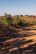 Vineyard at Herdade da Malhadinha Nova (Country House & Spa Wine), Alentejo