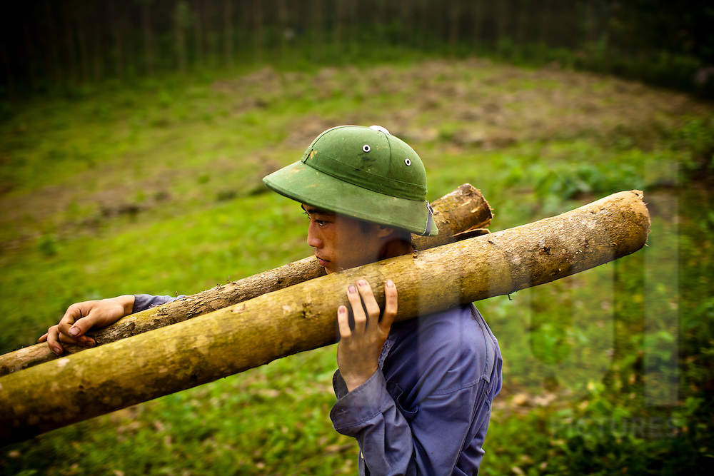 A young man carries felled tree trunks to help clear land for new crops in northern Vietnam.