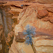 Check out this tree eeking a living on the overlook at Horseshoe Bend, Arizona.  Just below the Glen Canyon Damn.