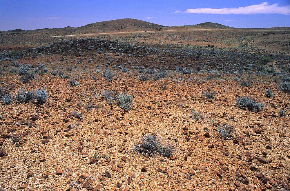 Semi desert landscape, with desert plants and shubs, South Australia.