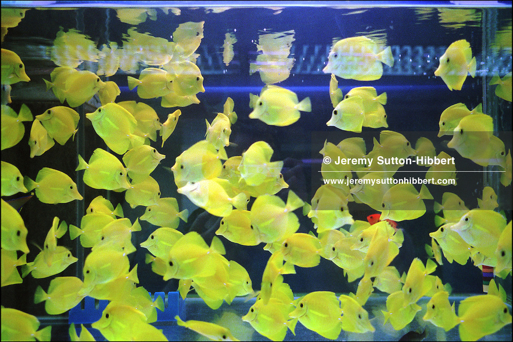 Tropical and ornamental fish and Koi carp in tanks, in fish shops, Tung Choi Street, Kowloon, Hong Kong, China.