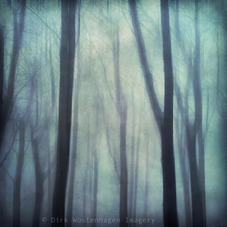 Redbubble products: http://www.redbubble.com/people/dyrkwyst/works/19886396-abstract-trees-in-fog