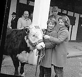 1961-23/02 Bull Show at RDS