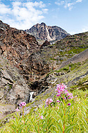 Dwarf Fireweed (Epilobium latifolium) and waterfall below the summit of Crow Pass in the Chugach National Forest in Southcentral Alaska. Summer. Morning.