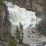Gibbon Falls in Yellowstone National Park during runoff