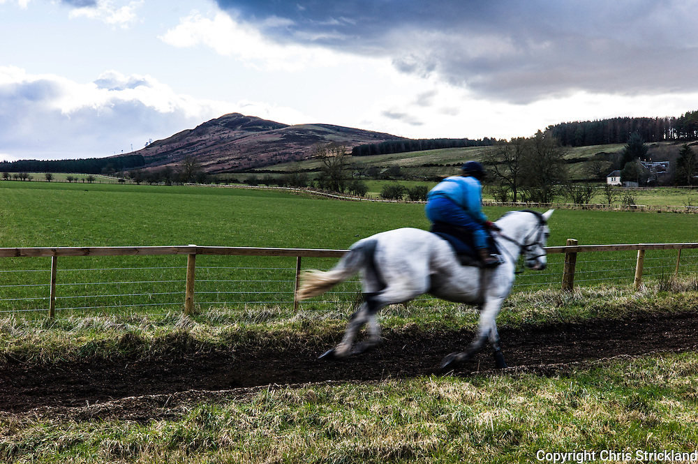Denholm, Hawick, Scottish Borders, UK. 23rd February 2016. Jockey Joanna Walton puts National Hunt racehorse Carters Rest through his paces on the gallops with Ruberslaw hill as a backdrop.