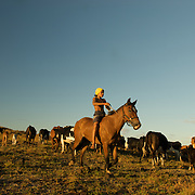 A boy rounds up cattle on Easter Island