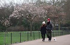 JAN 06 2013 Early Spring in London