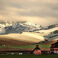 (red white and greening pastures)  --  A spring sunset bathes a thin layer of fresh snowfall in golden hues on a patchwork of greening spring fields behind a pair of red and white barns along the Washington and Oregon border Wednesday afternoon in this view from Powerline Road.        (3/26/08)        MZ Photo