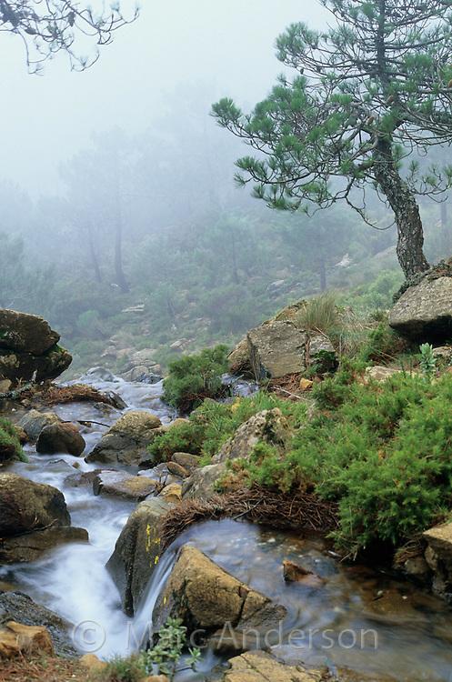 A stream in pine forest, Sierra Bermeja, Andalucia, Spain