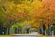 Southampton,  New York, Fall, Ox Pasture Rd., South Fork, Long Island