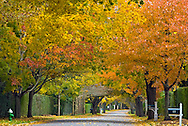 Southampton,  New York, Fall, Ox Pasture Rd., South Fork, Long Island