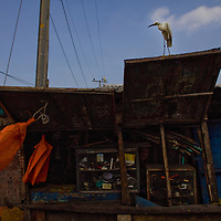 Alcatraz birds loom on the corrugated-tin roofs in Basurto market near Cartagena, Colombia...Photo by Robert Caplin.
