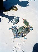 Fresh crabs ready to steam at Bai Sao (Star Beach.)