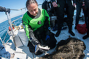 GUE diver examines the jaw bone of a sea lion that died due to entanglement in ghostnet