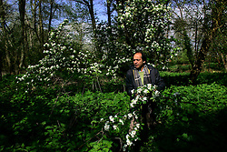 UK ENGLAND WILTSHIRE SALISBURY 1MAY06 - Novellist and poet Vikram Seth (53) collects branches of blossom at his estate in Salisbury, Wiltshire. His most recent book, Two Lives, is a non-fiction family memoir written at the suggestion of his mother, and published in October, 2005. It focuses on the lives of his great uncle (Shanti Behari Seth) and German-Jewish great aunt (Henny Caro) who met in Berlin in the early 1930s...jre/Photo by Jiri Rezac..© Jiri Rezac 2006..Contact: +44 (0) 7050 110 417.Mobile:  +44 (0) 7801 337 683.Office:  +44 (0) 20 8968 9635..Email:   jiri@jirirezac.com.Web:    www.jirirezac.com..© All images Jiri Rezac 2006 - All rights reserved.