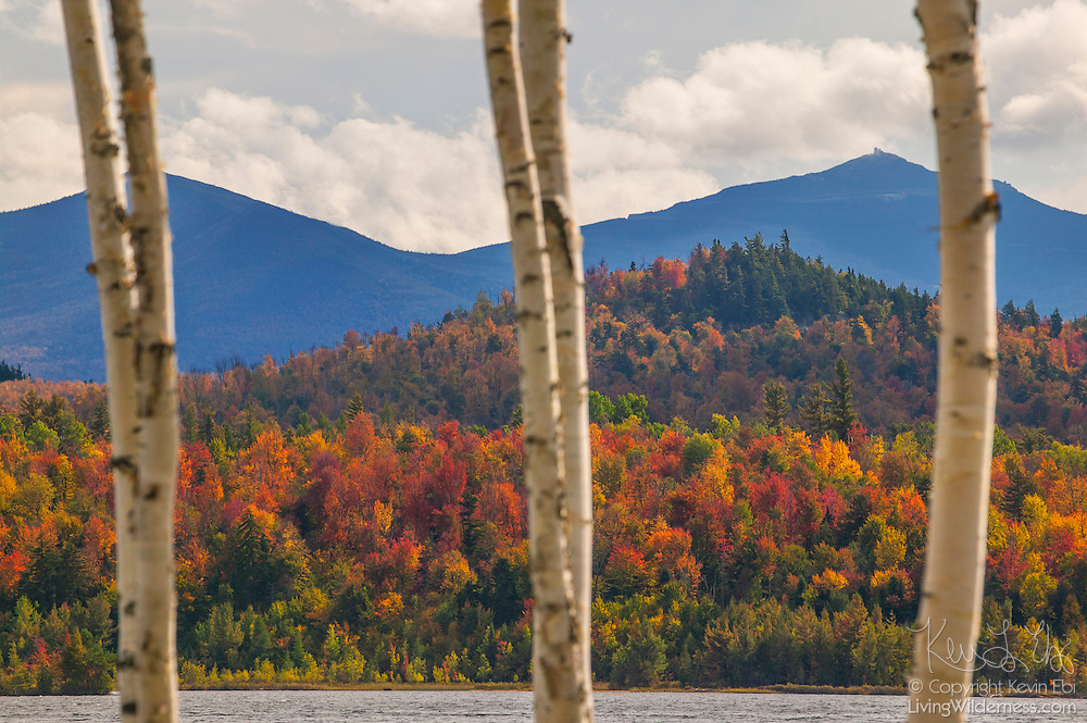 Several birch trees frame the view of the fall color that covers the hillsides surrounding Union Falls Pond in the Adirondacks of New York. Gilpin Hill, Bear Mountain, and Cranberry Mountain are visible in this image.
